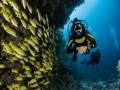 """صوت الإمارات - أميركي يصطاد حيوان مائي نادر يُسمى بـ""""سمكة التمساح"""" تعود إلى 100 مليون سنة"""