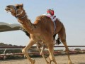 صوت الإمارات - نجاح كبير لسباق الهجن بالمملكة الأردنية الهاشمية في ميدان زايد